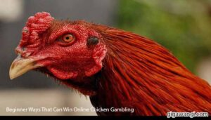 Beginner-Ways-That-Can-Win-Online-Chicken-Gambling